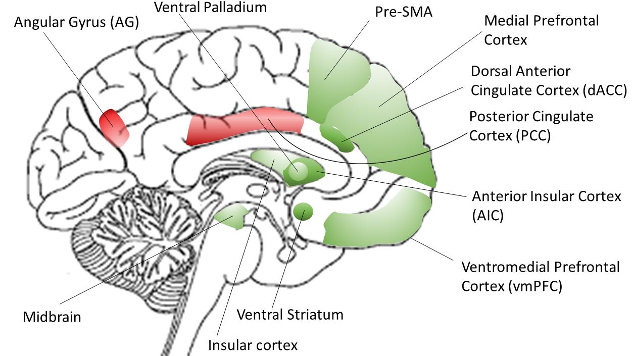 brain sagittal view